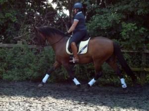 Equine Rider3